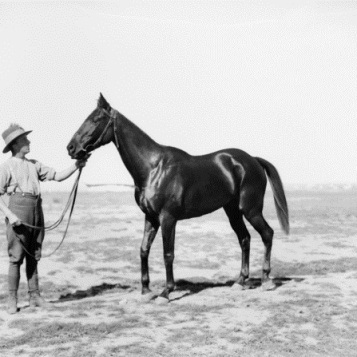 Portland Jimmy February 1919 Rafa, Sinai, Egypt photographer Frank Hurley (1885–1962) Assistant Director Veterinary Services, Anzac Mounted Division, Lieutenant Colonel John Kendall, of Shepparton, Victoria poses with his beloved steed 'Portland Jimmy'. Reproduced courtesy of the Australian War Memorial B00890